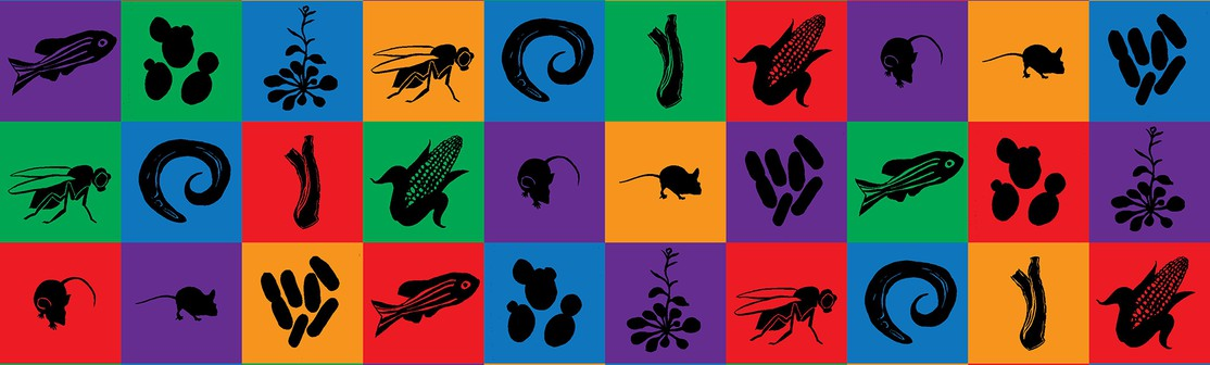 The Natural History of Model Organisms | Collections | eLife