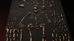 Meet <i>Homo naledi</i>