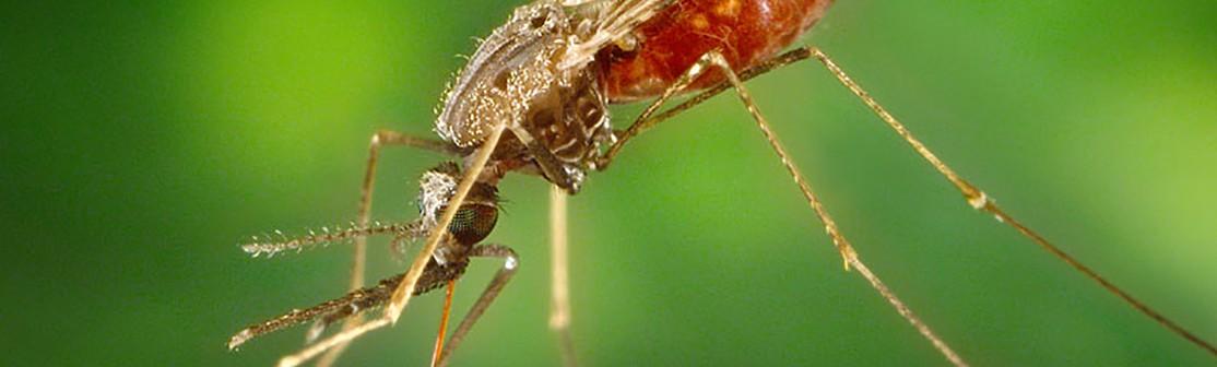 Tropical disease