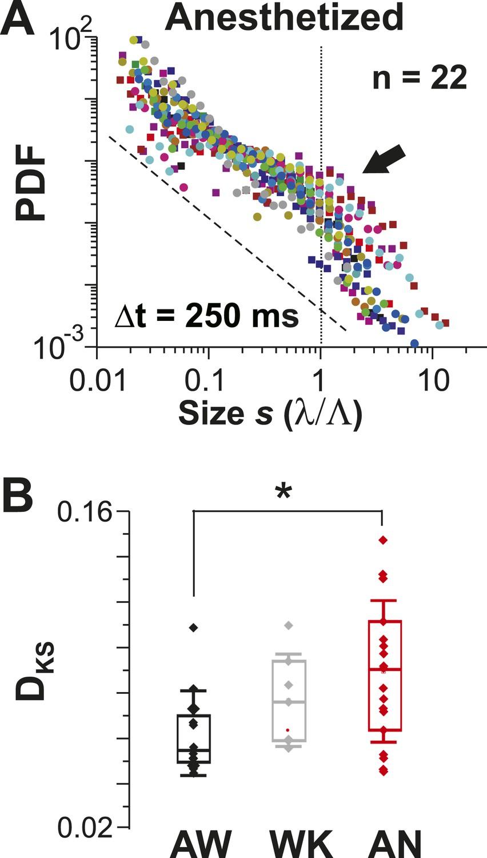 Irregular spiking of pyramidal neurons organizes as scale ...