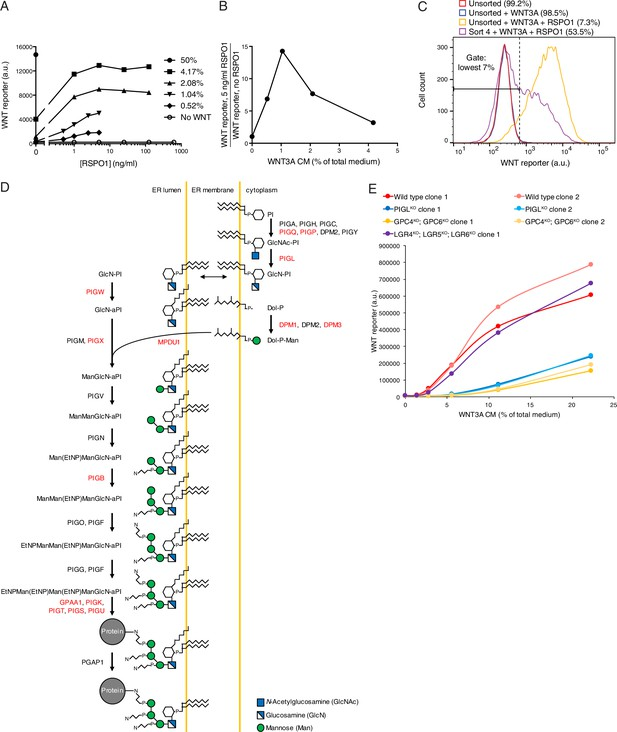 Figures and data in Comparative genetic screens in human