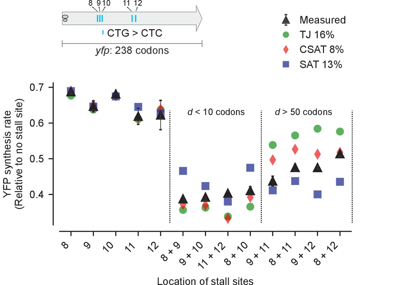 Kinetic Modeling Predicts A Stimulatory Role For Ribosome Collisions At Elongation Stall Sites In Bacteria Elife