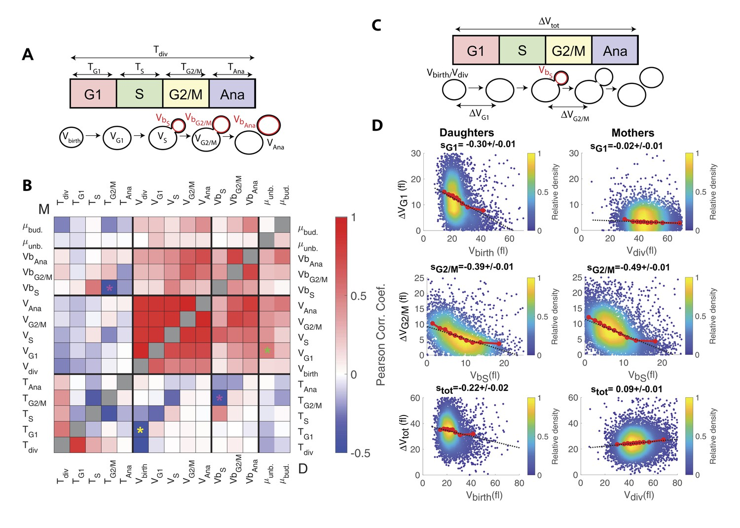 Multiple inputs ensure yeast cell size homeostasis during cell ...