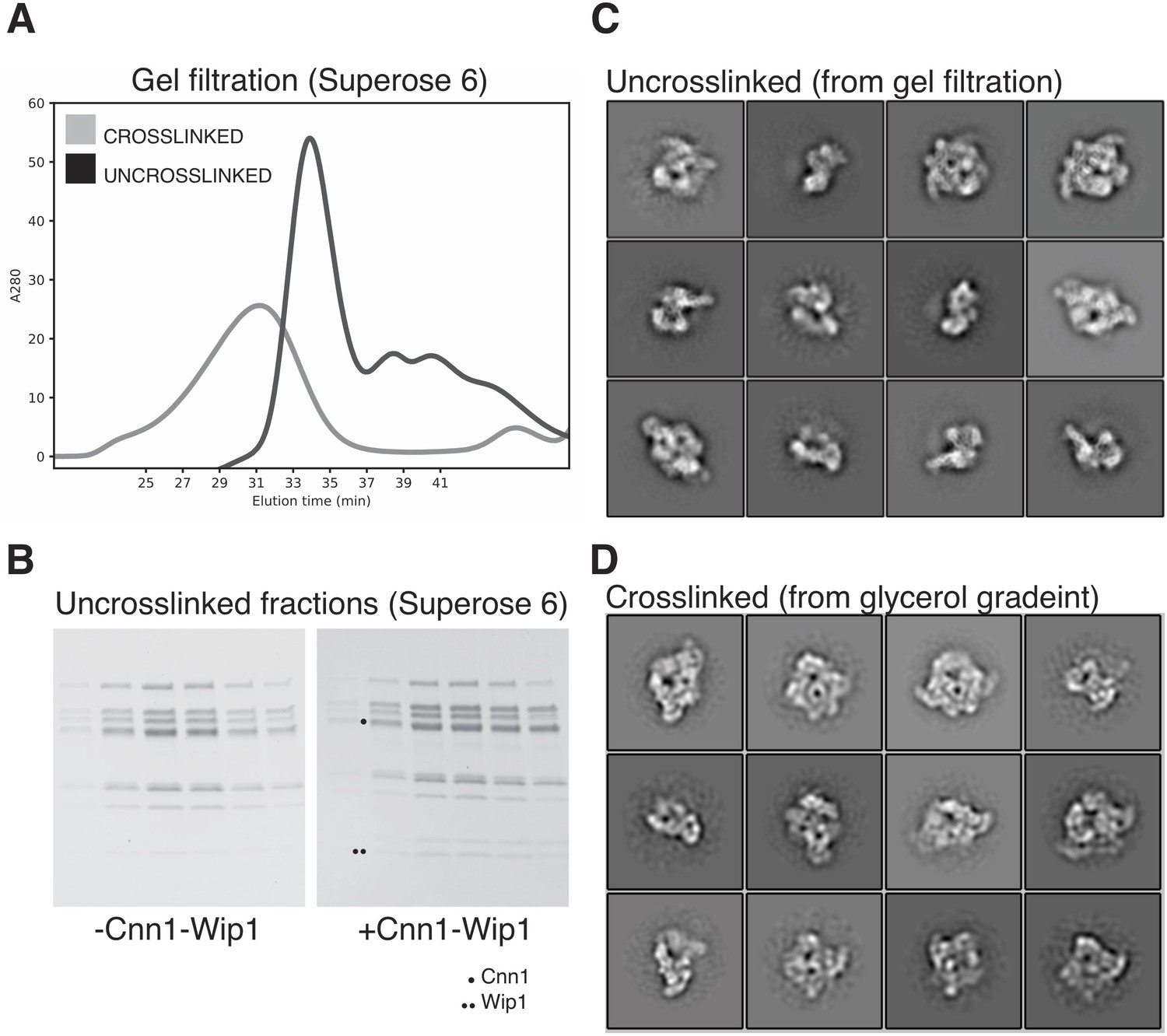 The structure of the Ctf19c/CCAN from budding yeast | eLife
