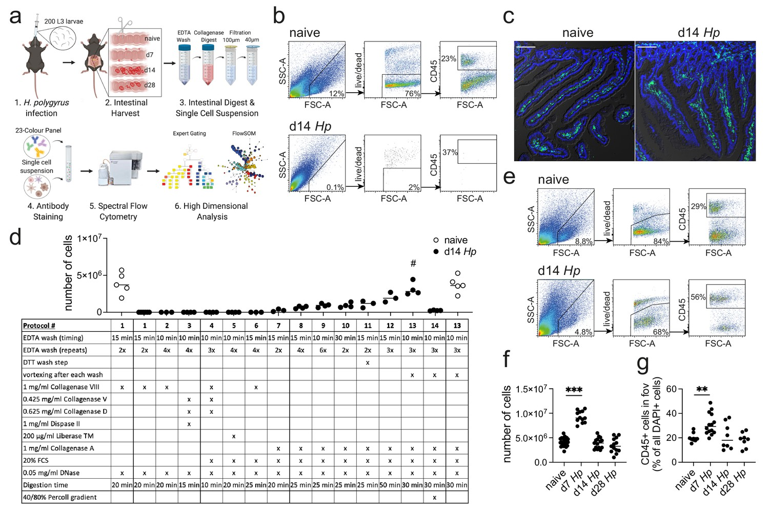 High-dimensional analysis of intestinal immune cells during ...
