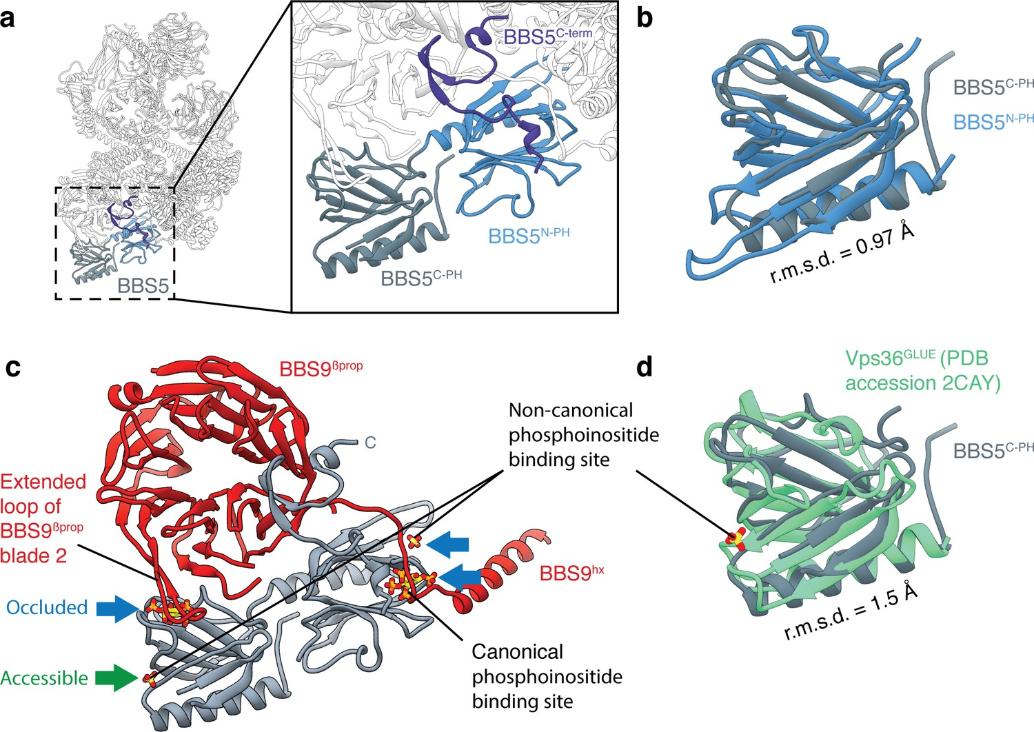 Structure and activation mechanism of the BBSome membrane protein ...