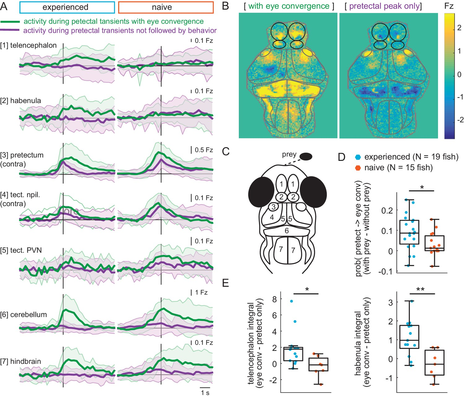 Experience, circuit dynamics, and forebrain recruitment in larval ...