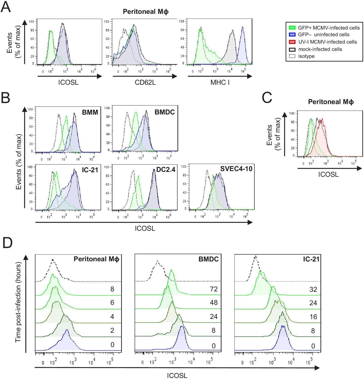 Cytomegalovirus restricts ICOSL expression on antigen-presenting ...