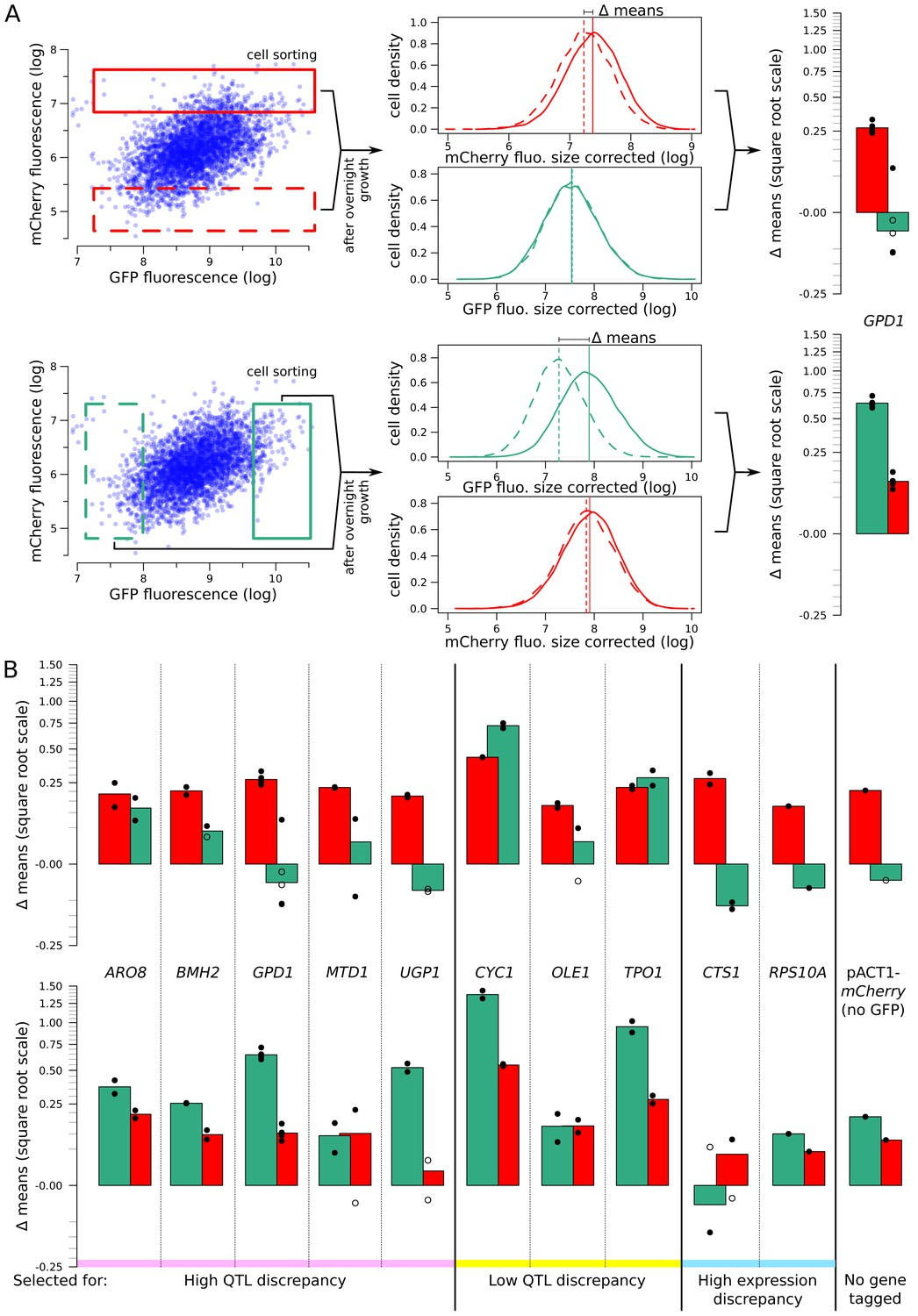 Simultaneous quantification of mRNA and protein in single cells ...