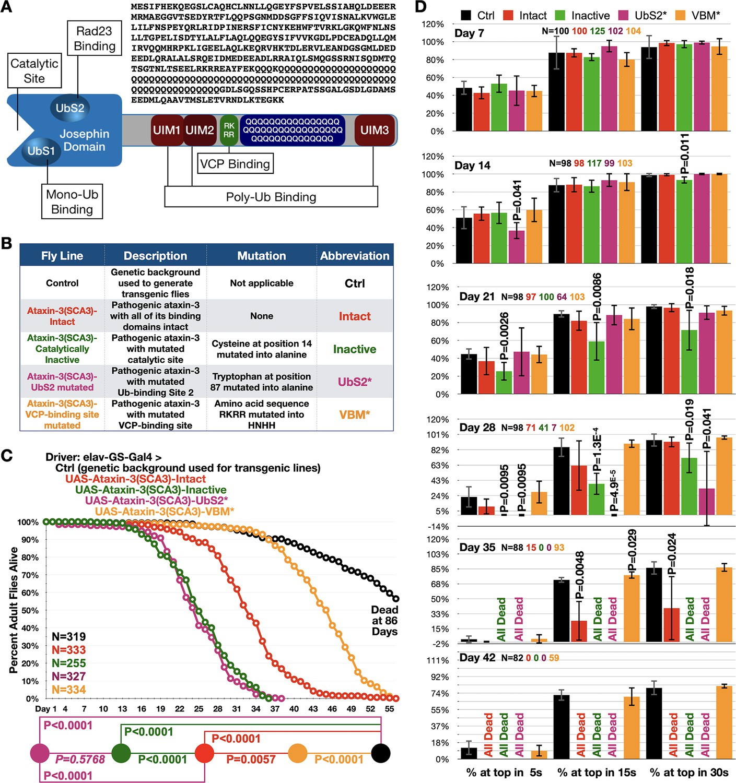 Ubiquitin-interacting motifs of ataxin-3 regulate its ...