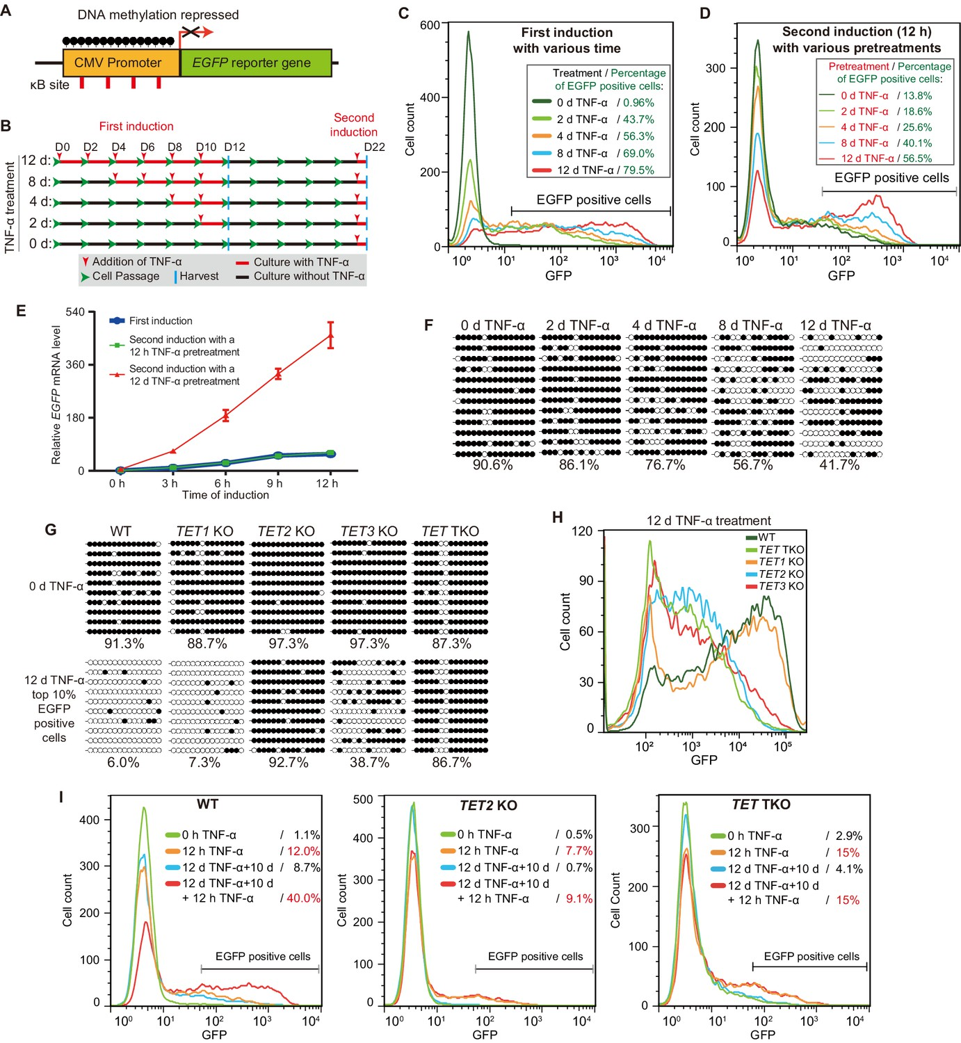 Sustained TNF-  stimulation leads to transcriptional memory that ...
