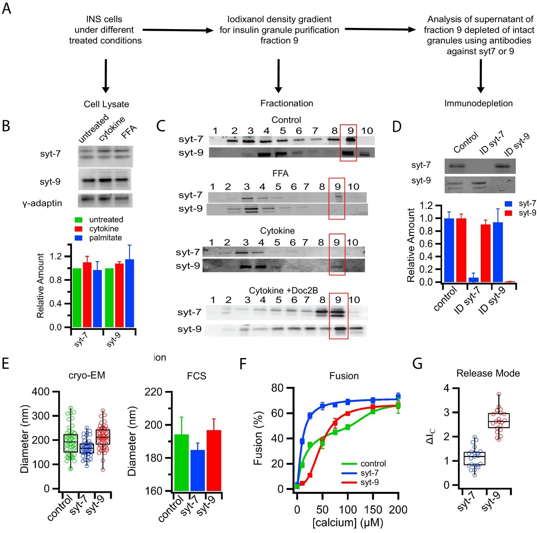 Distinct insulin granule subpopulations implicated in the ...