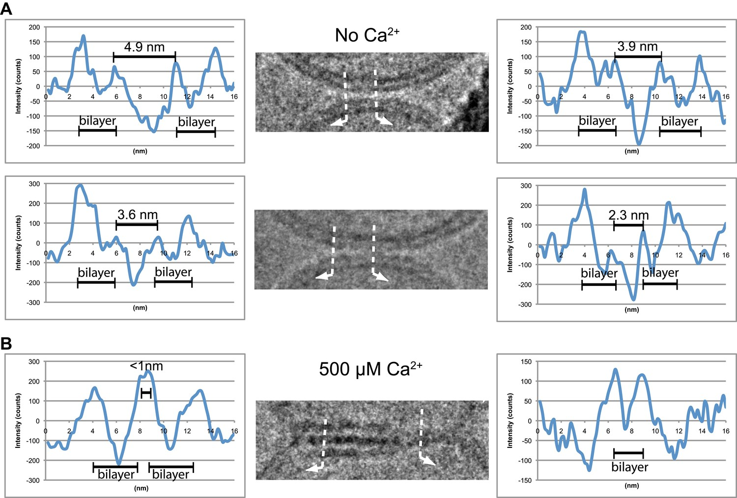 Synaptic Proteins Promote Calcium Triggered Fast Transition From Wording And 1996 Ford F 150 Fuse Box Diagram Image Density Profile Analysis Of Selected Vesiclevesicle Interfaces A Two Representative Point Contacts Between