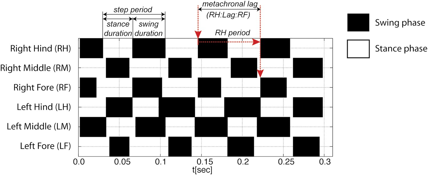 Quantification of gait parameters in freely walking wild type and