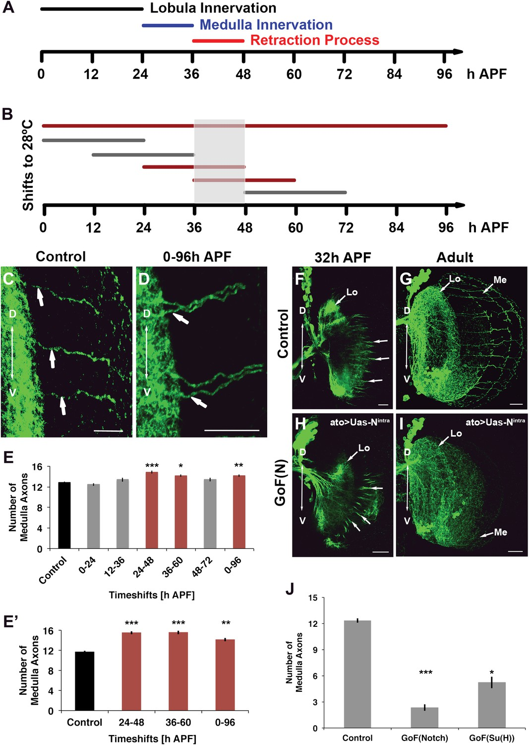 Mutual Inhibition Among Postmitotic Neurons Regulates Robustness Of Ym 50 Wiring Schematic Notch Acts Specifically During The Axon Sorting Phase To Regulate Dcn Targeting A Axonal Dynamics Dcns Pupal Development