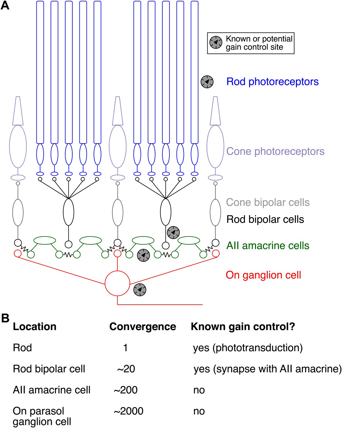 Controlling gain one photon at a time | eLife
