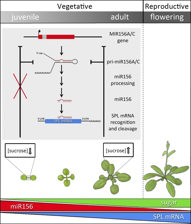 download Science (Vol. 310, No. 5750, November 2005)