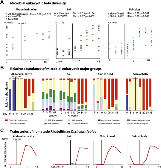 A microbial clock provides an accurate estimate of the postmortem interval in a mouse model system