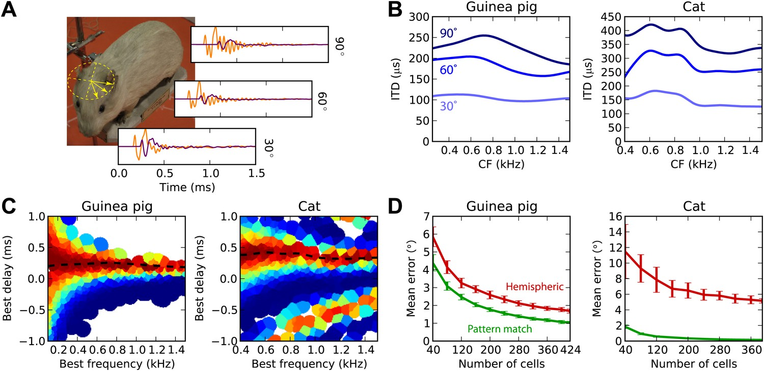 Decoding neural responses to temporal cues for sound