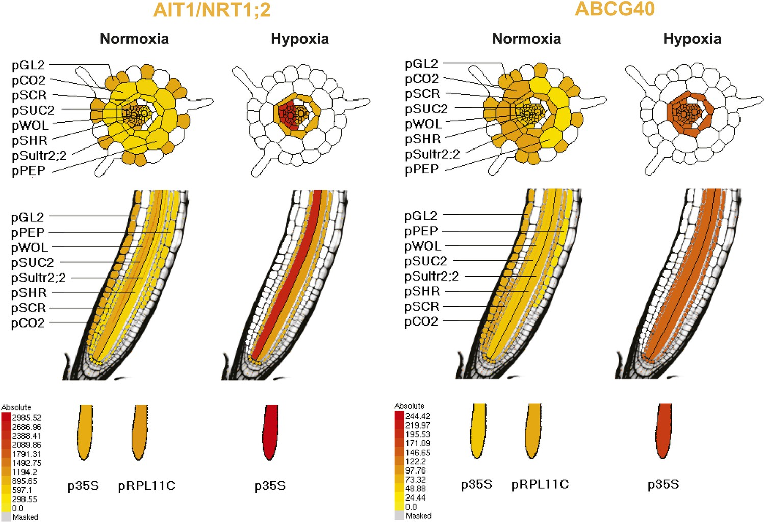 Abscisic Acid Dynamics In Roots Detected With Genetically Encoded Database Security Alfred Basta Pdf Pattern Of Ribosome Associated Transcripts For Ait1 And Abcg40 Transporter Genes