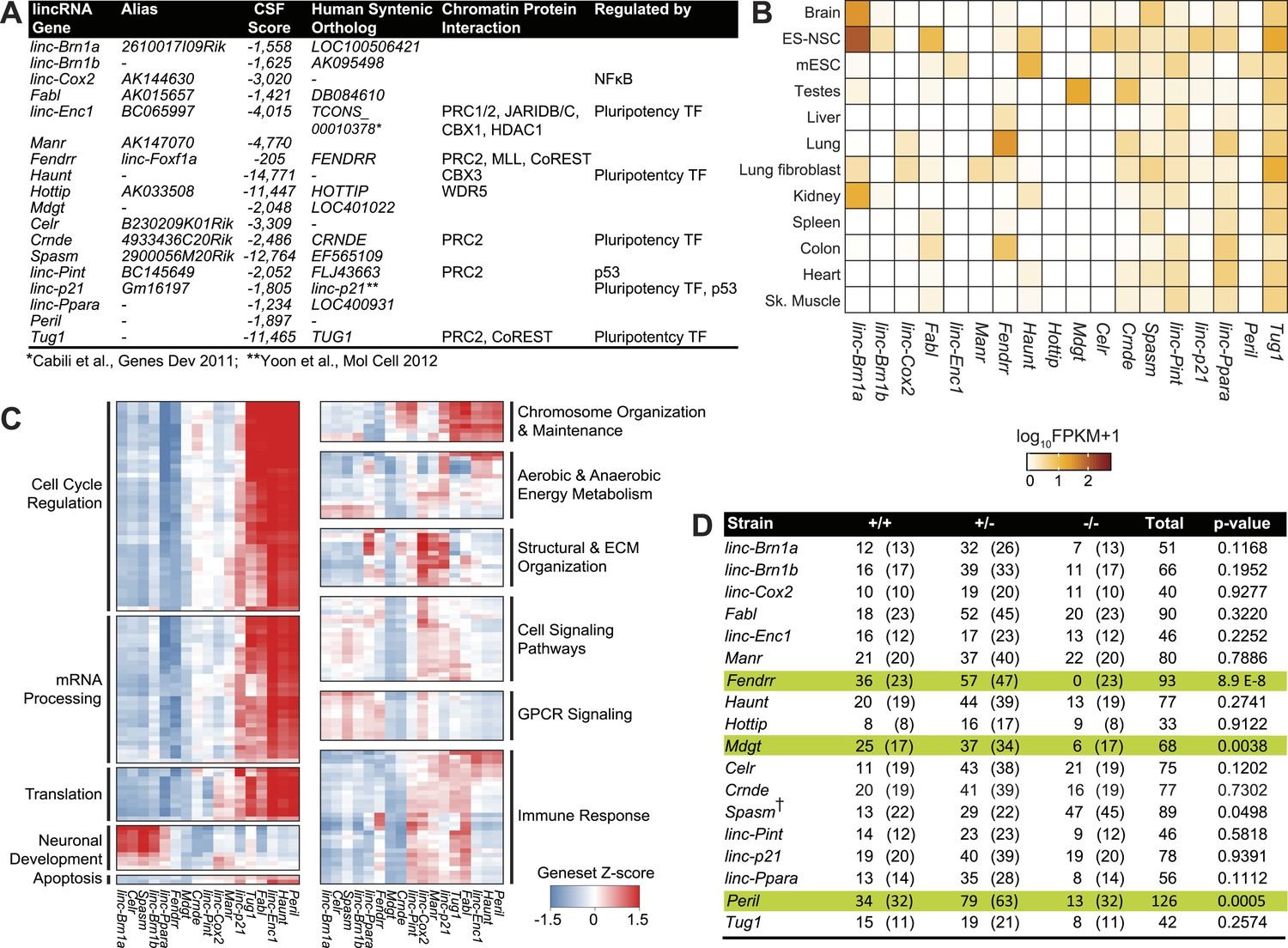 Multiple knockout mouse models reveal lincRNAs are required for life