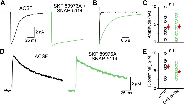 Midbrain dopamine neurons sustain inhibitory transmission