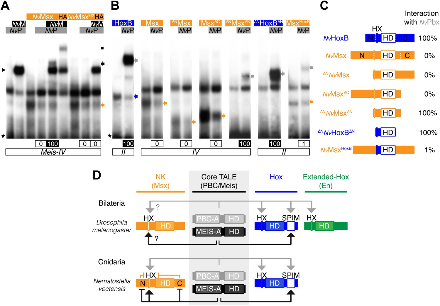 Molecular insights into the origin of the Hox-TALE patterning ...