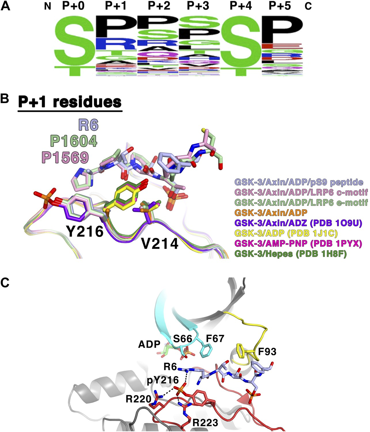 Structural Basis Of GSK-3 Inhibition By N-terminal