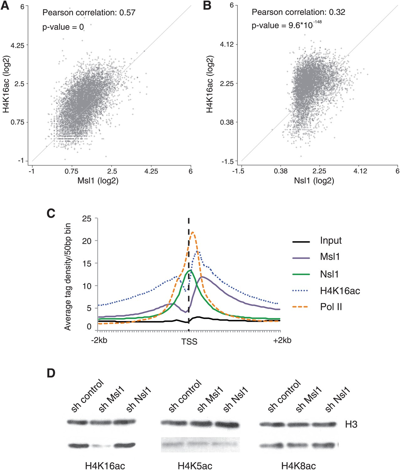 Mof Associated Complexes Have Overlapping And Unique Roles In Pump Action Shotgun Diagram Msl Affects H4k16 Acetylation Mescs