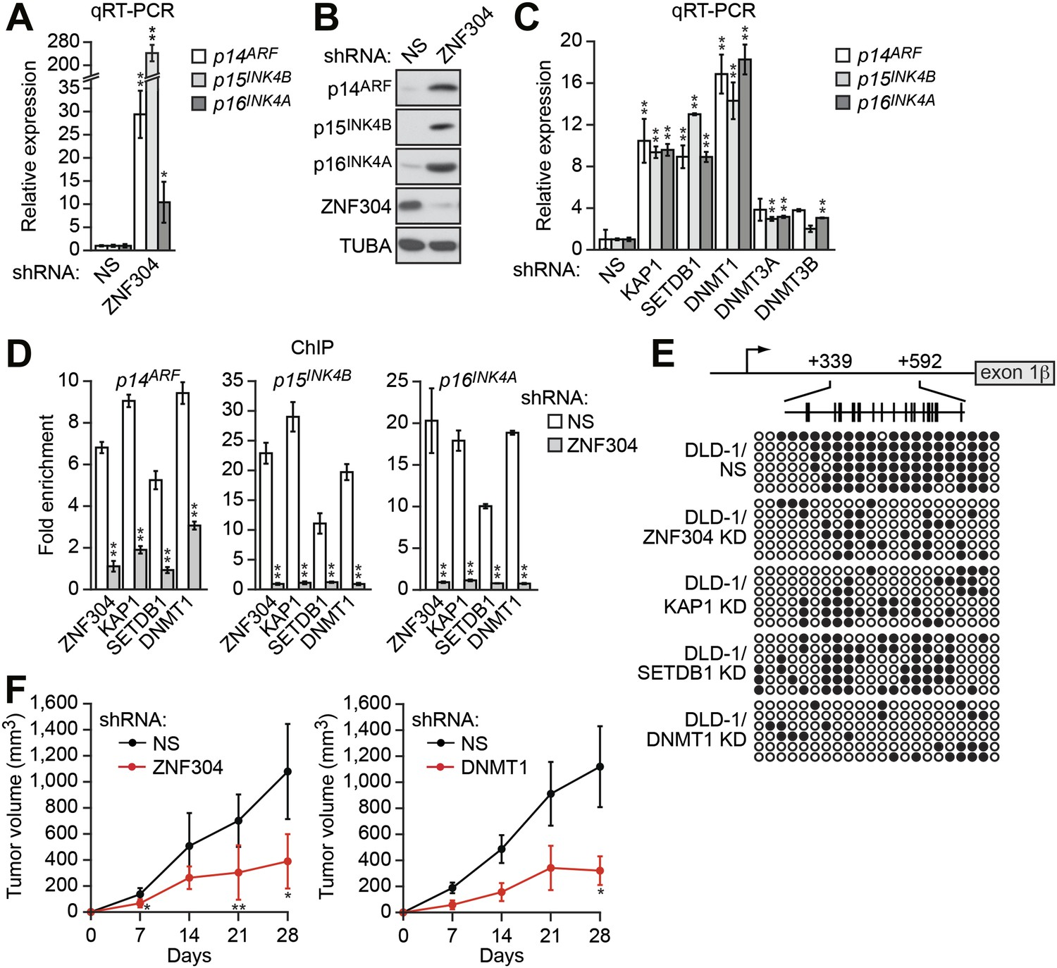 A Kras Directed Transcriptional Silencing Pathway That Mediates The In Above Circuit When Toggle Switch Is Open As Shown 12 Identification Of Znf304 Corepressor Complex Required For Ink4 Arf Crcs
