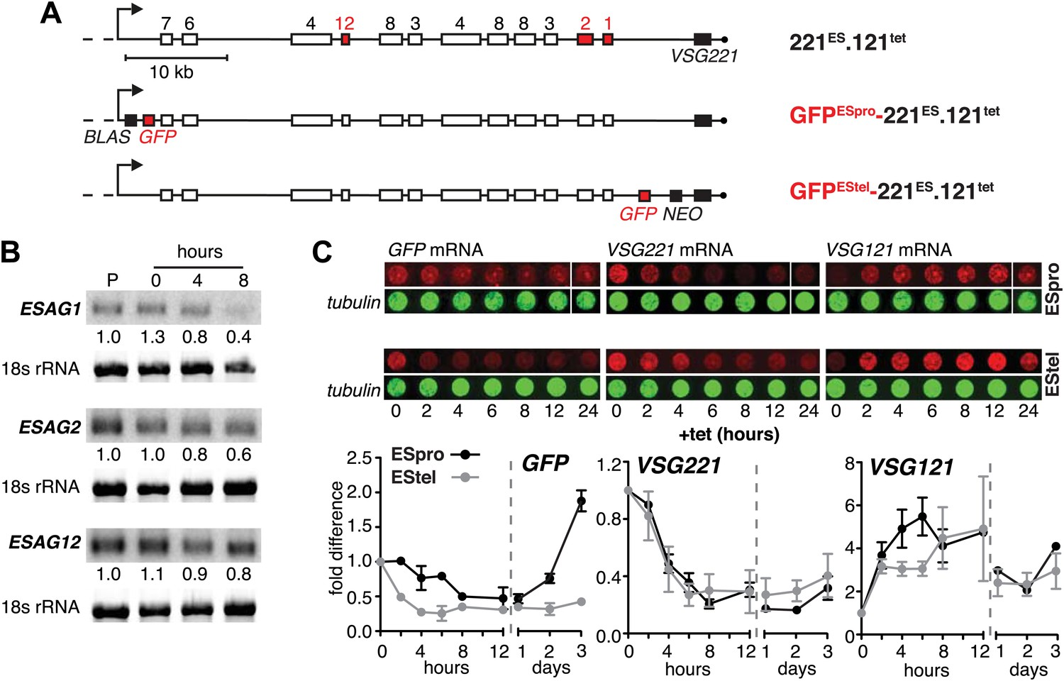 Expression site attenuation mechanistically links antigenic