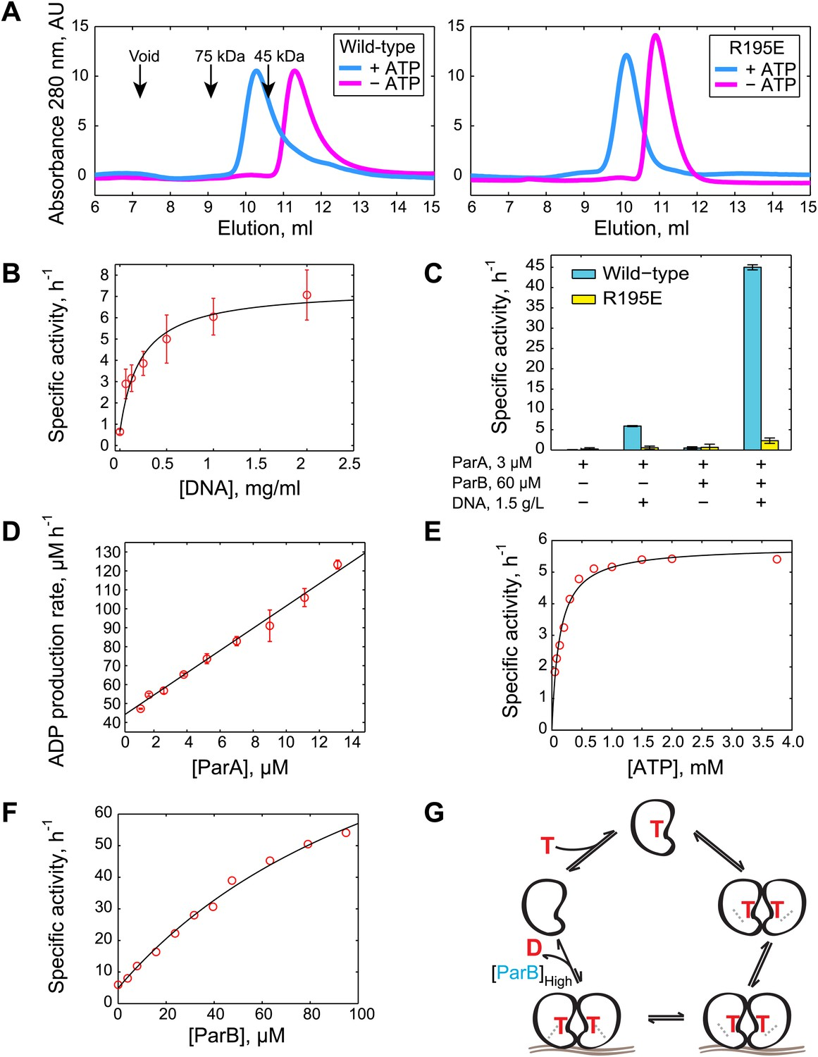 Evidence for a DNA-relay mechanism in ParABS-mediated chromosome