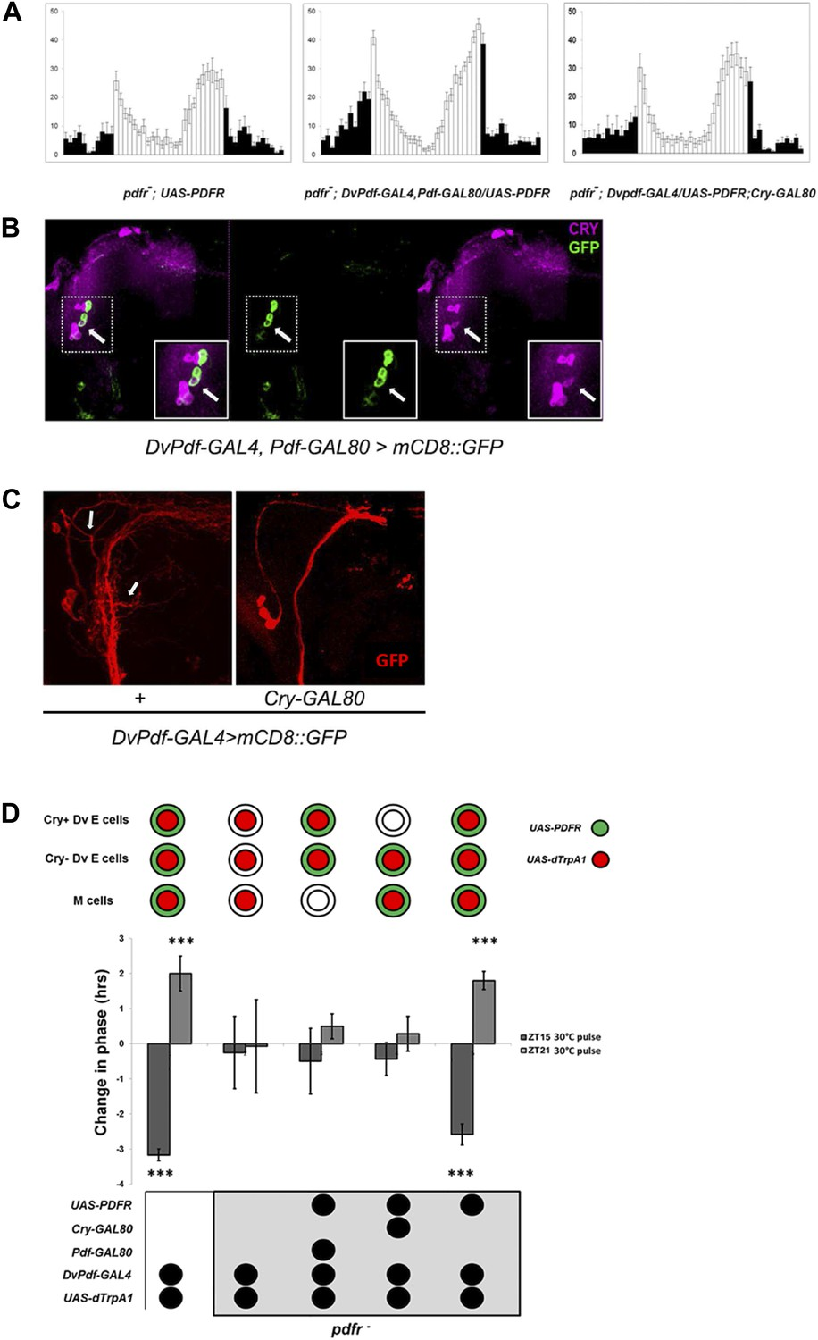 Pdf Neuron Firing Phase Shifts Key Circadian Activity Neurons In Led Driver 6 Channels With Shift Control Restoring E Cell Pdfr Rescues Period Rhythmicity And Induced