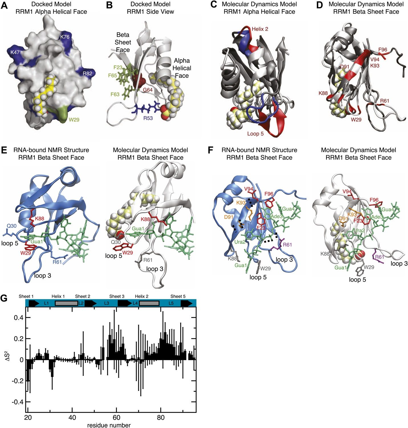 Allosteric inhibition of a stem cell RNA-binding protein by an