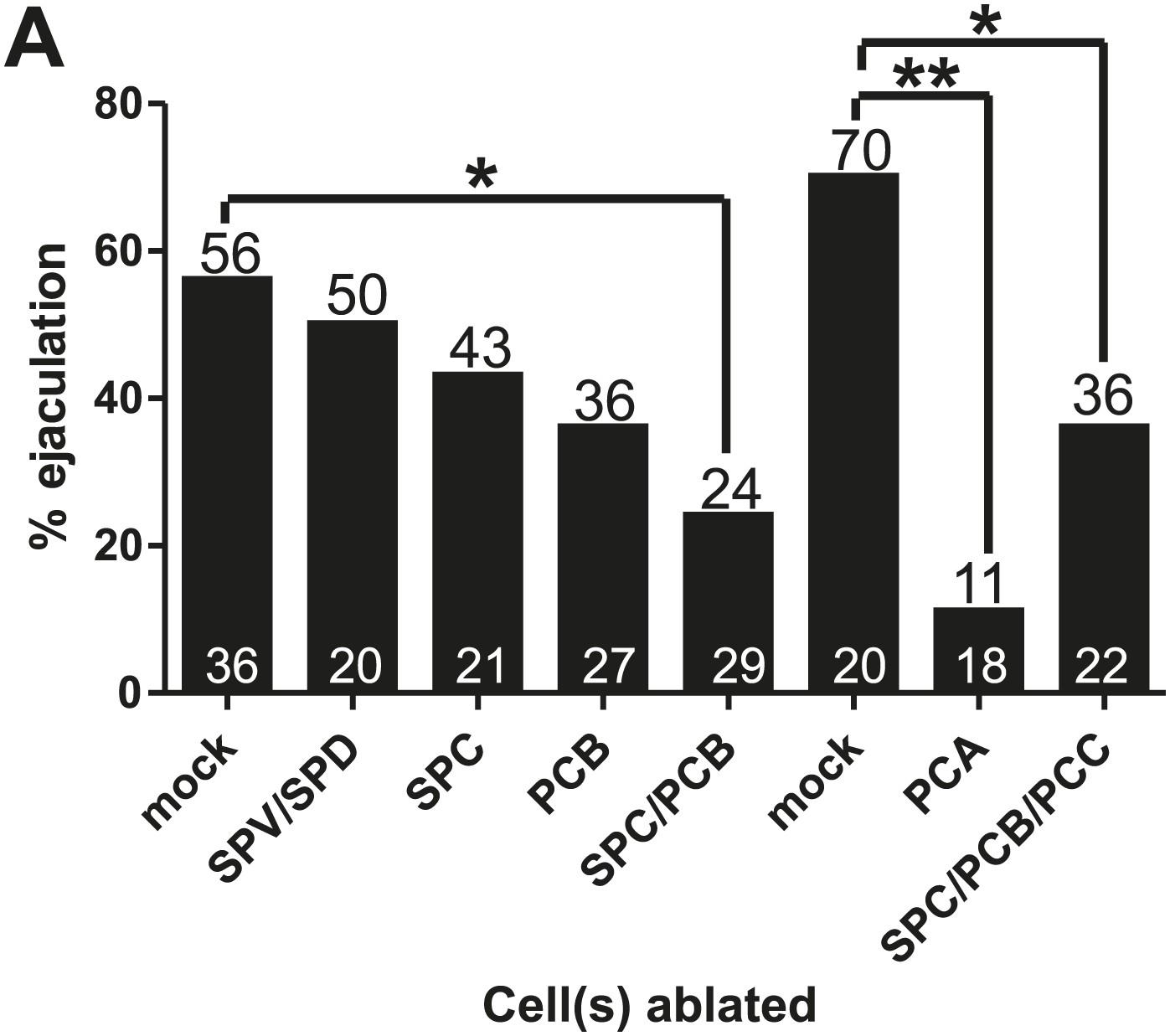 Caenorhabditis Elegans Male Sensory Motor Neurons And Dopaminergic 1974 International 1700 Wiring Diagram Of Chr2 Expressing Males That Ejaculate In Response To 475 Wavelength Light Stimulation