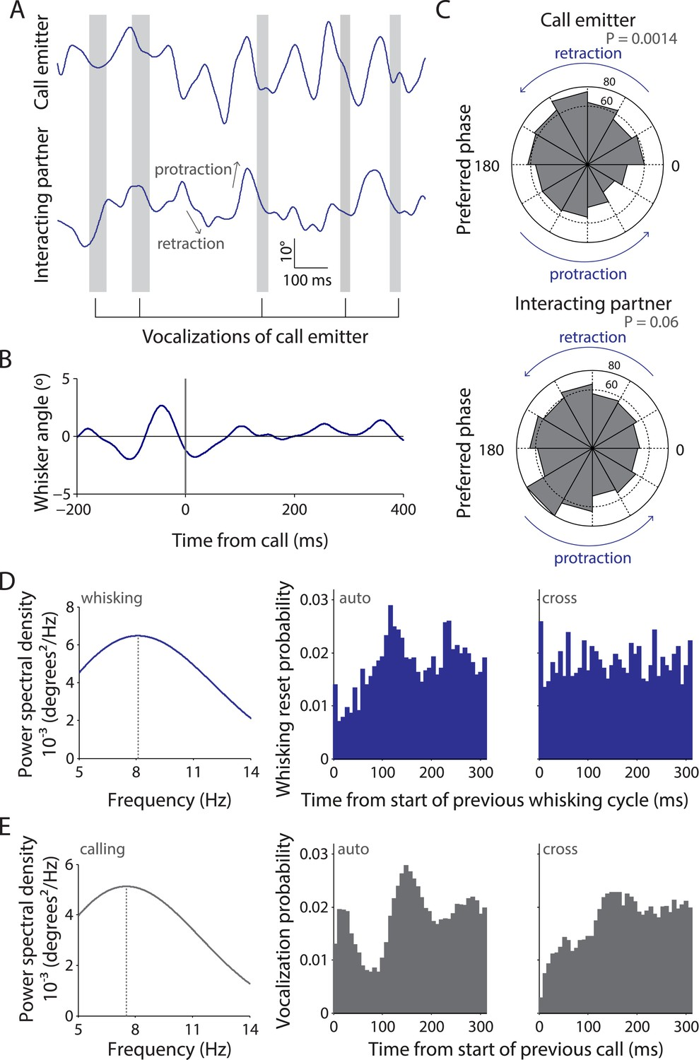 Vocalization–whisking coordination and multisensory integration of