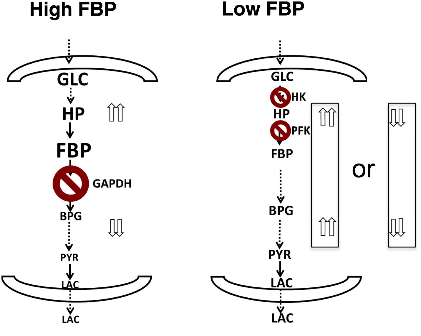 Quantitative determinants of aerobic glycolysis identify
