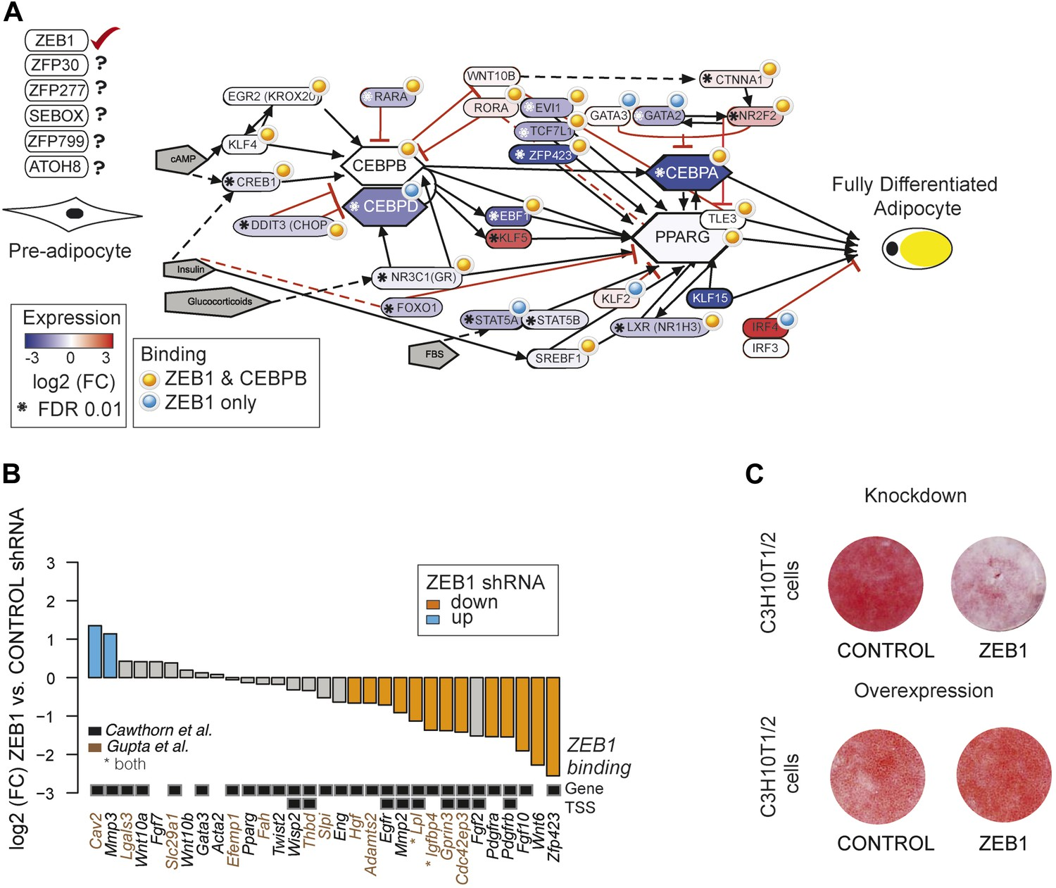 Identification of the transcription factor ZEB1 as a central