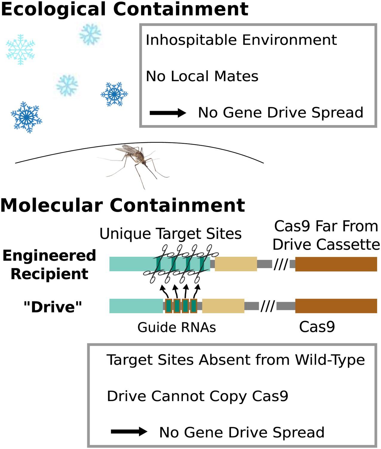 Emerging Technology: Concerning RNA-guided gene drives for the ...