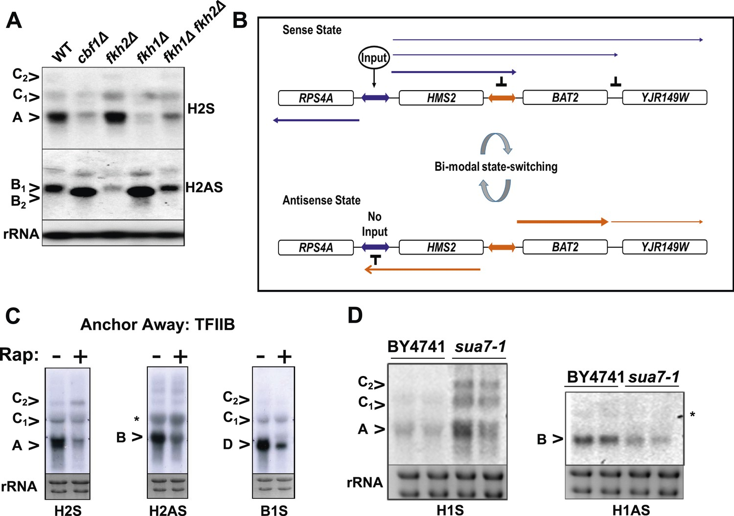 Transcription Mediated Insulation And Interference Direct Gene To 1033 B This Will Require An Isolated Switch Control General Specific Factors State Switching At Hms2