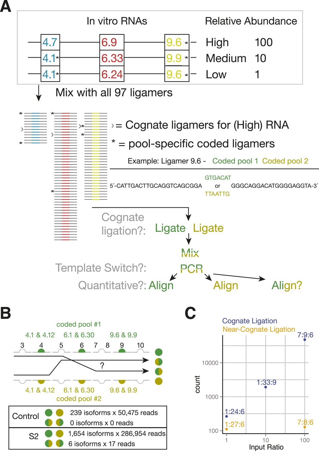 Assessing long-distance RNA sequence connectivity via RNA