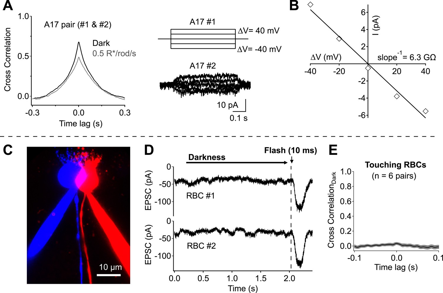 Cross Synaptic Synchrony And Transmission Of Signal Noise Across Lead Lag Wiring Diagram Network Divergence Electrical Coupling Only Weakly Contribute To Correlations Observed In Highly Overlapping A17 Amacrine Cells