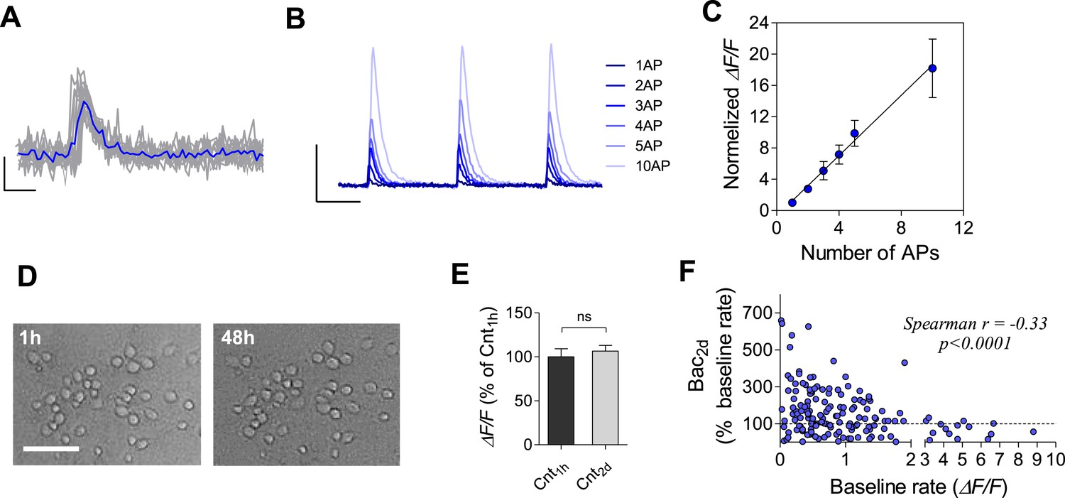Interplay Between Population Firing Stability And Single Neuron Rack Wiring Diagram Aps Calcium Imaging Using Gcamp6f Sensor In Cultured Hippocampal Neurons
