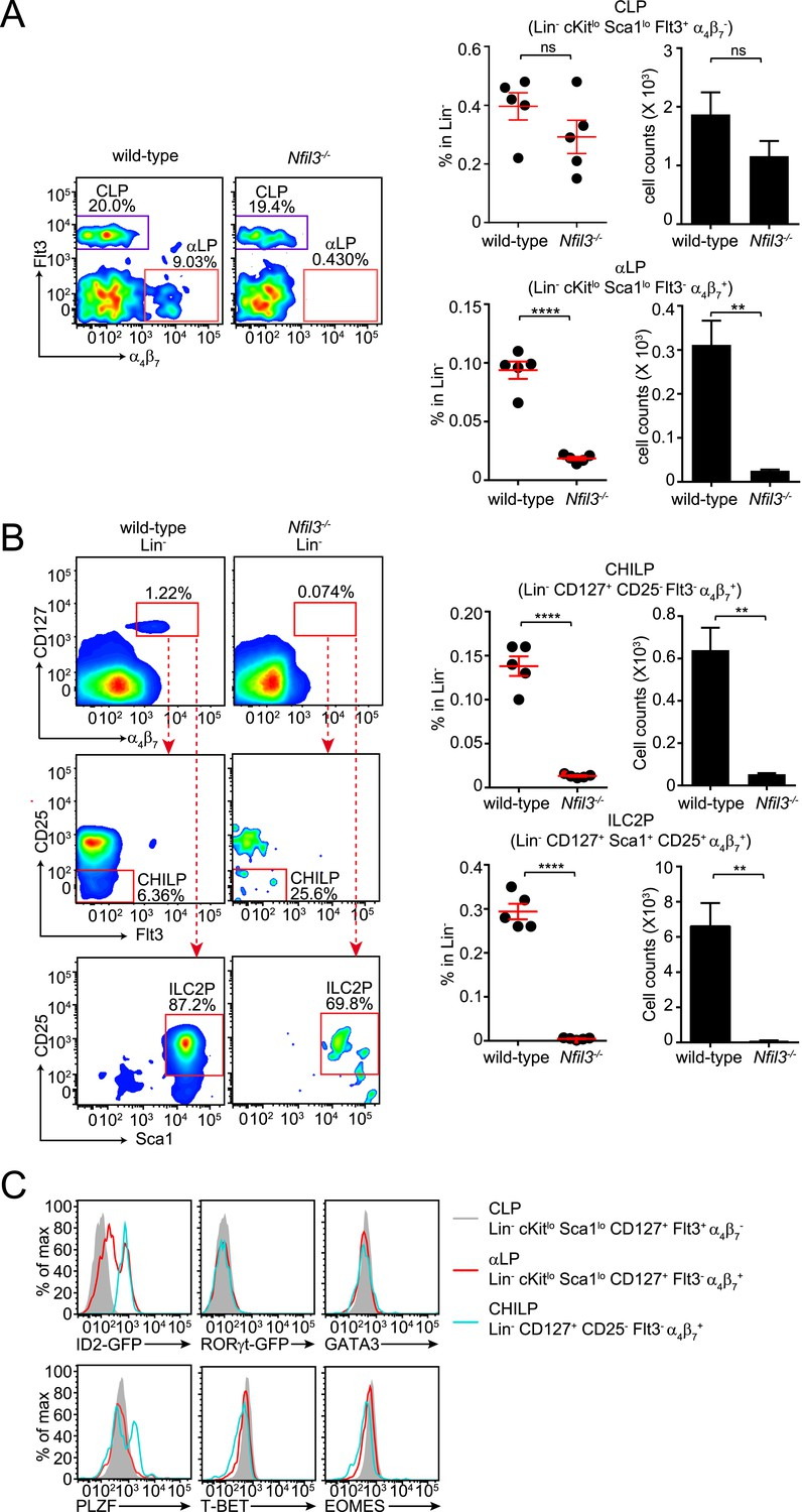 The Basic Leucine Zipper Transcription Factor Nfil3 Directs Inhale Style Mosquito Killer Lamp Electric Circuit Mice Are Deficient In Bone Marrow Ilc Precursors Downstream Of Clp