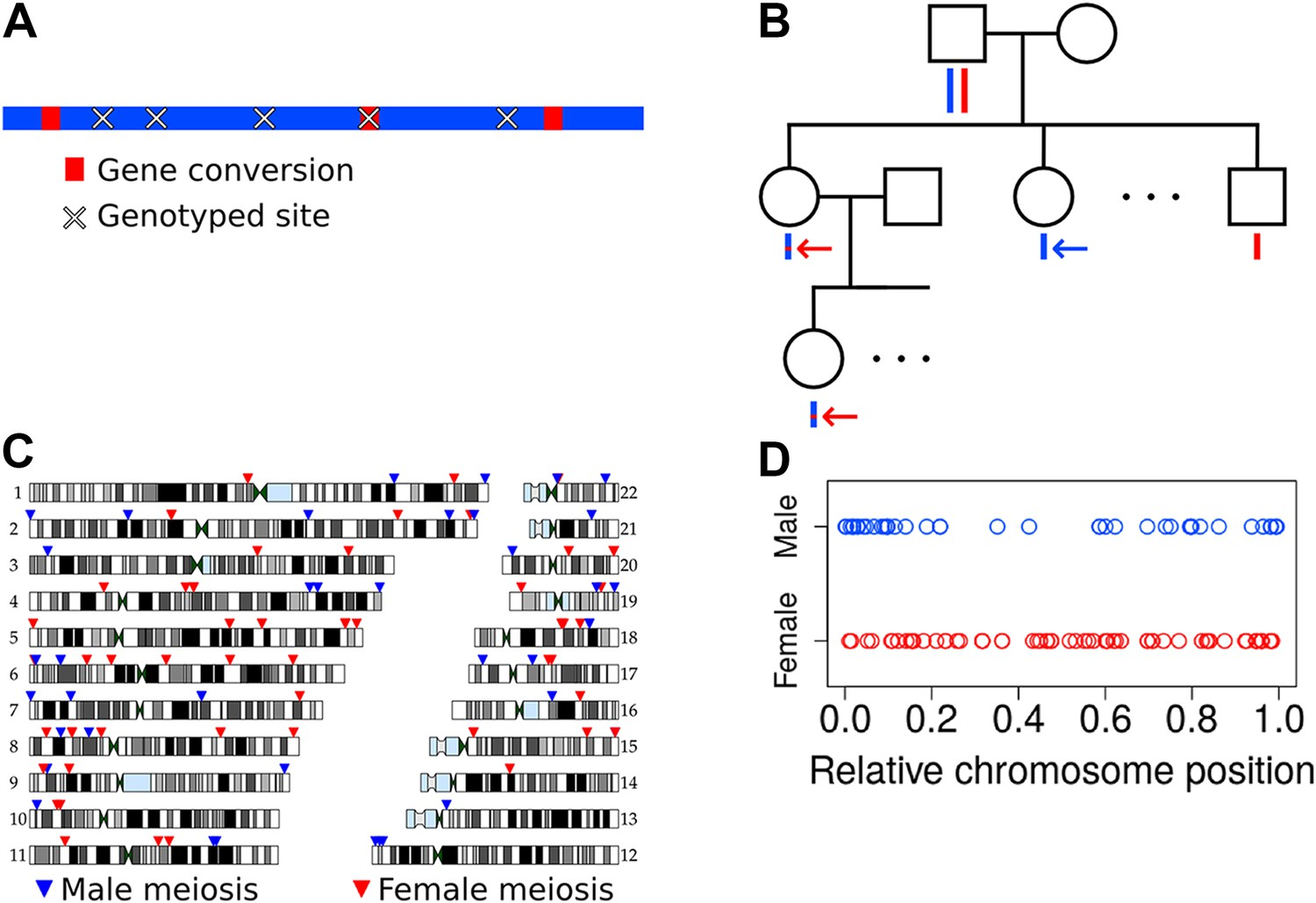 Non-crossover gene conversions show strong GC bias and