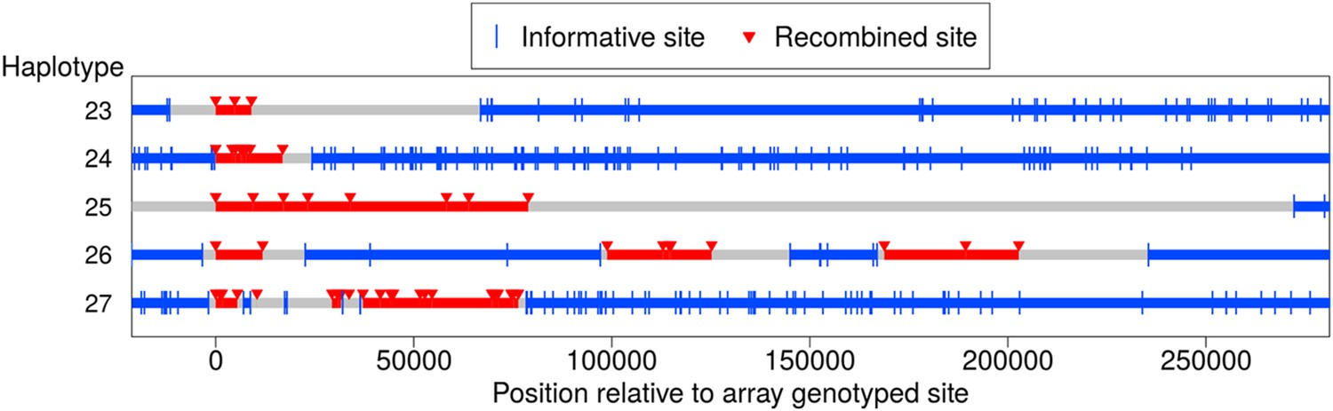 Non-crossover gene conversions show strong GC bias and unexpected
