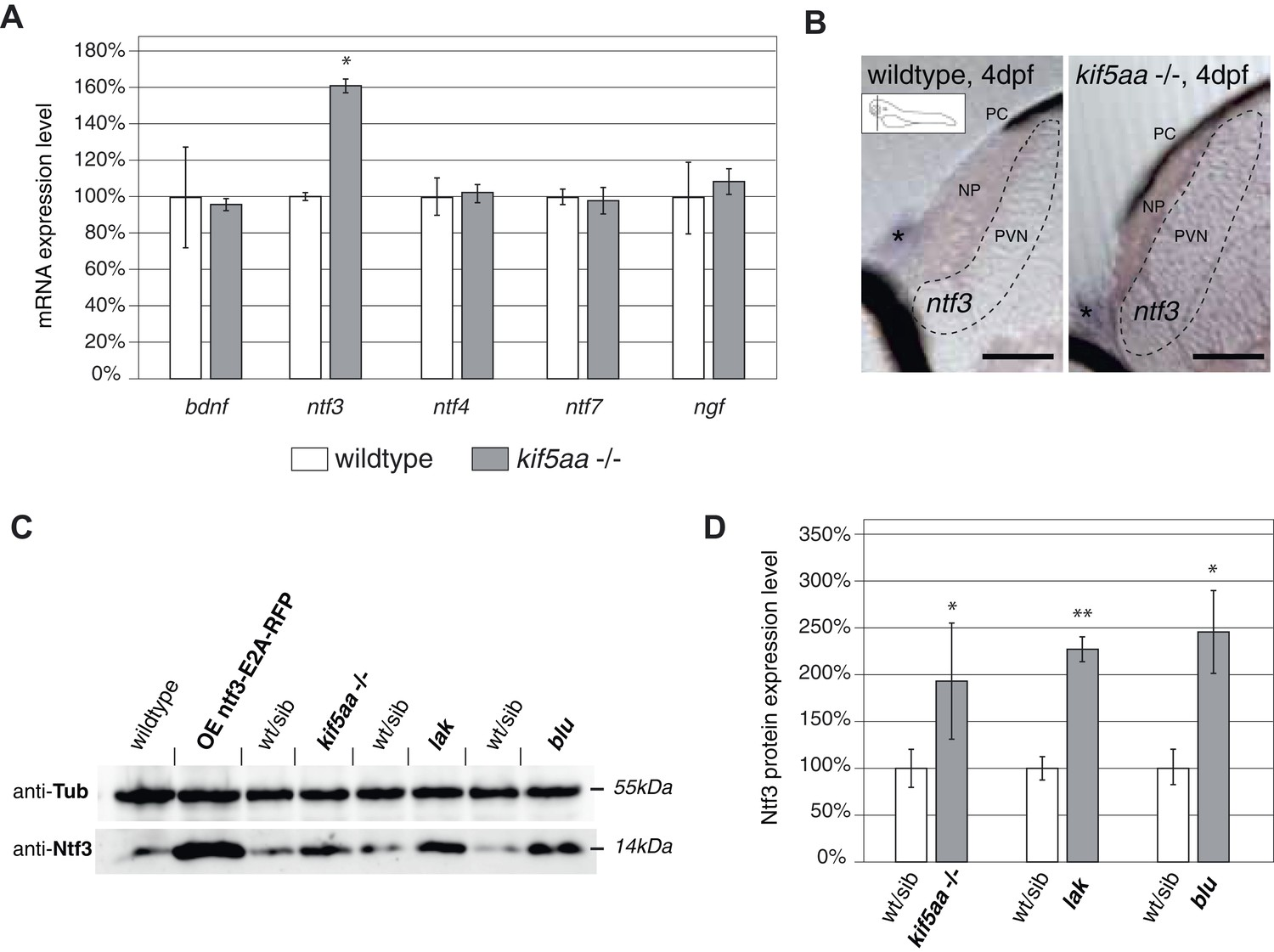 Deletion Of A Kinesin I Motor Unmasks Mechanism Homeostatic We Want V B The Voltage At Base To Be 06 Higher That Expression Neurotrophic Factor Neurotrophin 3 In Visually Impaired Mutants