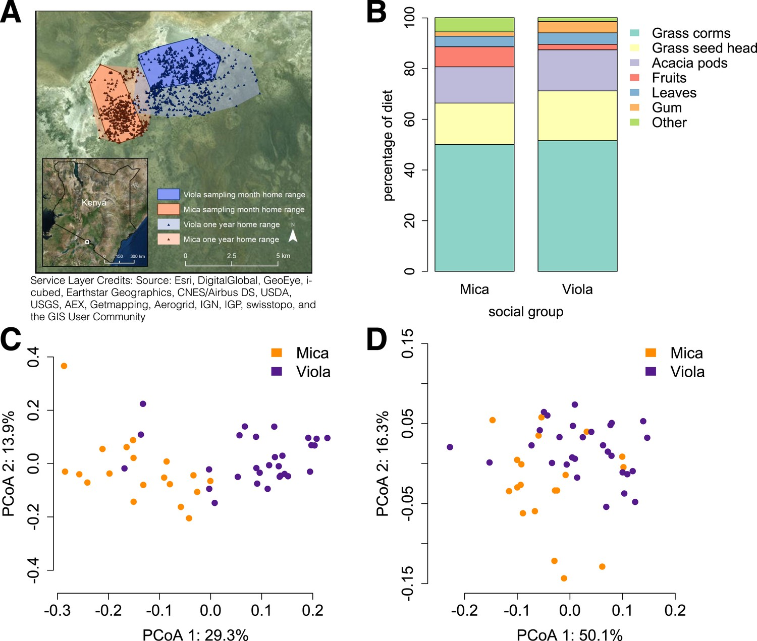 Social networks predict gut microbiome composition in wild baboons