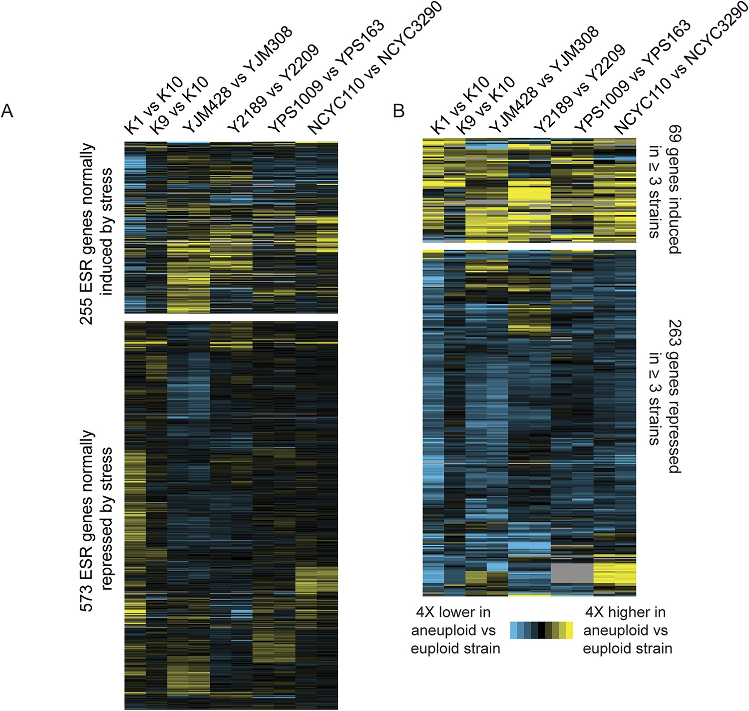 84abbed82af2d Naturally aneuploid strains show a weak common response to aneuploidy but  no activation of the ESR.