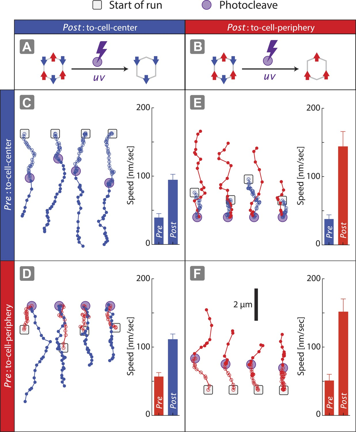 Tuning Myosin Driven Sorting On Cellular Actin Networks Elife Motor Control Circuit File Alternative Link Bidirectionmotorspeed Disengagement Of One Species Resolves The Competition